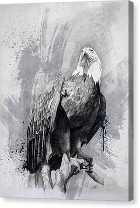 Bald Eagle Drawing Canvas Print by Steve Goad