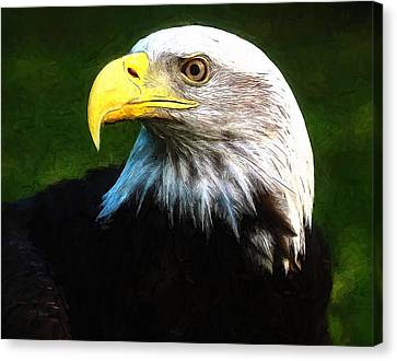 Bald Eagle Face Canvas Print by Dan Sproul