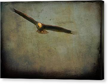 Bald Eagle Flying   Textured Canvas Print by Dan Friend