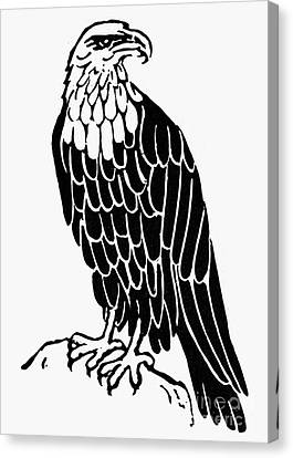 Bald Eagle Canvas Print by Granger