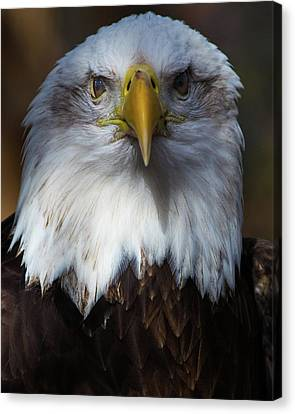 Bald Eagle Head Canvas Print
