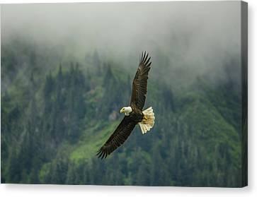 Bald Eagle In Juneau Alaska Canvas Print