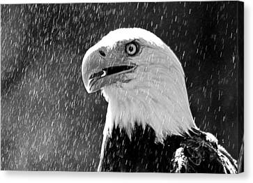 Bald Eagle In The Mist Canvas Print