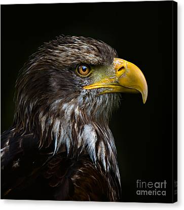 Canvas Print featuring the photograph Bald Eagle by Joerg Lingnau