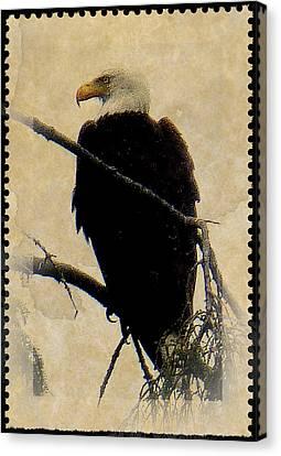 Canvas Print featuring the photograph Bald Eagle by Lori Seaman