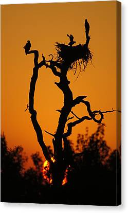 Canvas Print featuring the photograph Bald Eagle Nestling At Sunset by Lynda Dawson-Youngclaus