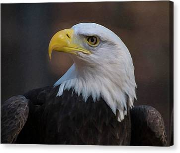Bald Eagle Painting Canvas Print by Chris Flees