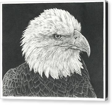 Bald Eagle Canvas Print by Remrov