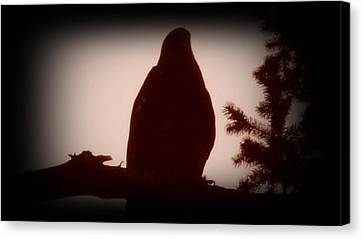 Bald Eagle Twilight Canvas Print