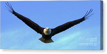 Bald Eagle Victory Canvas Print by Dean Edwards