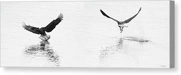 Bald Eagles Fishing Canvas Print