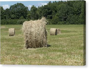 Bales Of Hay In New England Field Canvas Print by Erin Paul Donovan