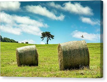 Bales Canvas Print - Bales Of Straw In A Field, Auvergne, France by Bernard Jaubert