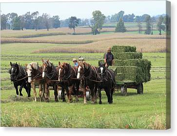 Baling The Hay Canvas Print by Lou Ford