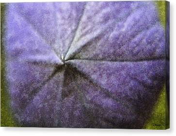 Balloon Flower Canvas Print by Teresa Mucha