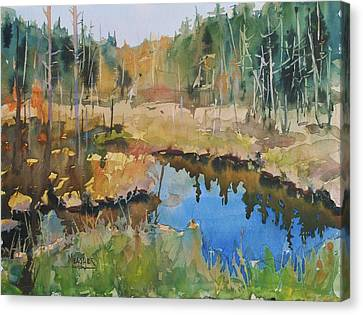 Bally Road Bog Canvas Print by Spencer Meagher