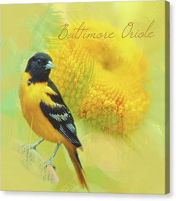 Canvas Print featuring the photograph Baltimore Oriole Watercolor Photo by Heidi Hermes