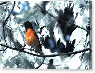 Baltimore Orioles Dream Canvas Print by Nancy TeWinkel Lauren