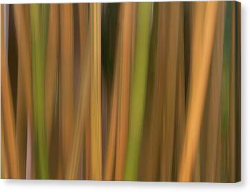 Canvas Print featuring the photograph Bamboo Abstract by Carolyn Dalessandro