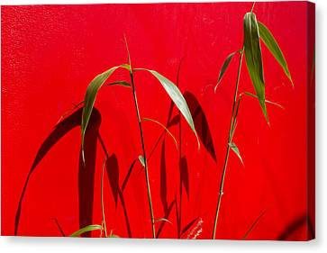 Bamboo Against Red Wall Canvas Print