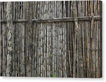 Bamboo And Barbed Wire Fence Canvas Print