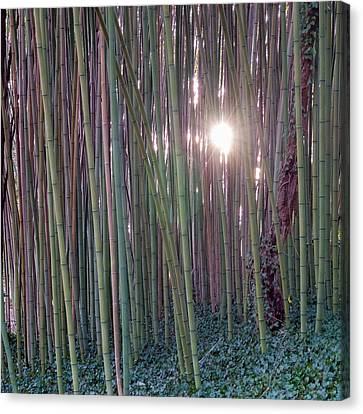 Bamboo And Ivy Canvas Print