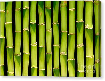 Bamboo Bamboo Bamboo Canvas Print by Olivier Le Queinec