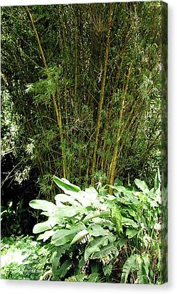 F8 Bamboo Canvas Print by Donald k Hall