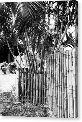 Bamboo Fence Canvas Print by Isabelle Mbore