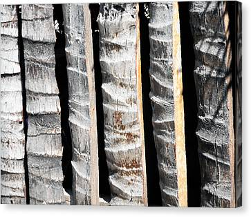 Bamboo Fence Canvas Print by Ron Kandt