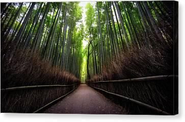 Bamboo Forest Canvas Print by Heath Smith