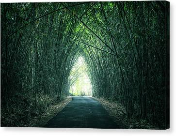 Bamboo Forest Canvas Print by Joana Kruse