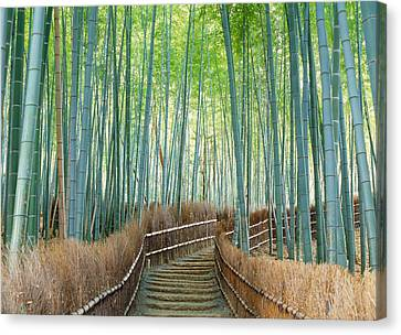 Bamboo Forest, Kyoto City, Kyoto Canvas Print