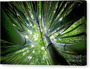 Bamboo Forest Maui  Canvas Print by Monica and Michael Sweet