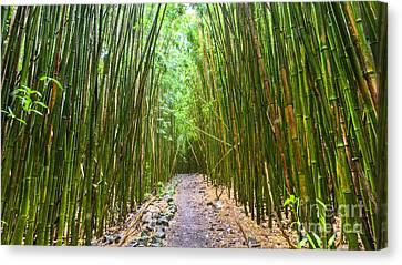Bamboo Forest Trail Hana Maui 2 Canvas Print by Dustin K Ryan