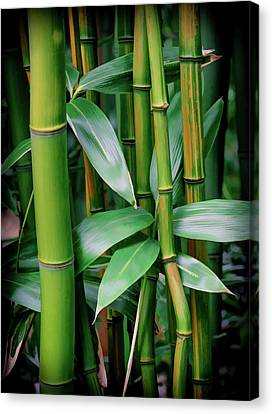 Bamboo Green Canvas Print by Athena Mckinzie