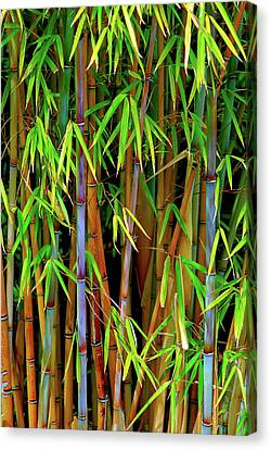 Canvas Print featuring the photograph Bamboo by Harry Spitz