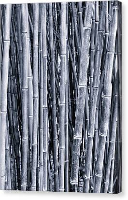 Bamboo Canvas Print by Keith Bowden