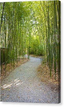 Bamboo Path 1 Canvas Print by Denise Keegan Frawley