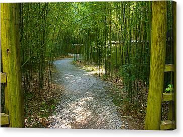 Bamboo Path 2 Canvas Print by Denise Keegan Frawley