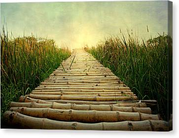 Bamboo Path In Grass At Sunrise Canvas Print by Atul Tater