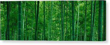Bamboo Trees In A Forest Canvas Print by Panoramic Images