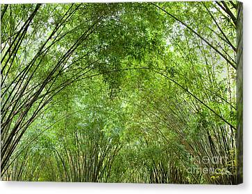 Bamboo Trees In Wangjianglou Park In Chengdu China Canvas Print