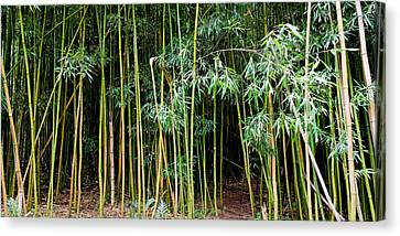 Bamboo Wind Chimes  Waimoku Falls Trail  Hana  Maui Hawaii Canvas Print by Michael Bessler