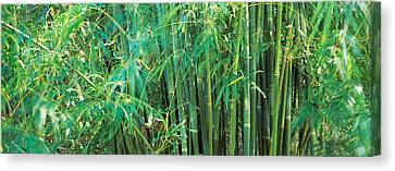 Bamboos In A Forest Canvas Print