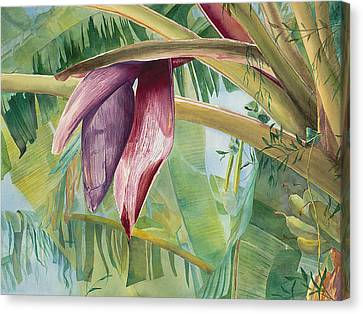 Banana Flower Canvas Print by AnnaJo Vahle