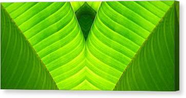 Banana Leaf Abstract 2 Canvas Print