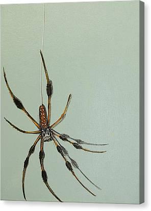 Banana Spider Canvas Print by Jude Labuszewski