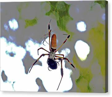 Banana Spider Lunch Time 1 Canvas Print