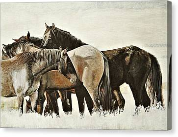 Band O' Five - Mustangs Canvas Print by Susie Gordon